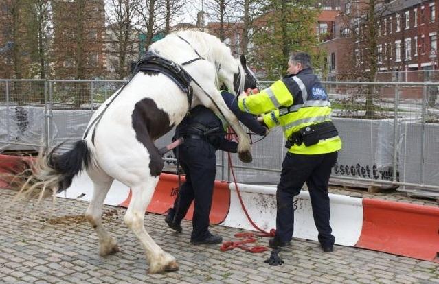 horse%20cops