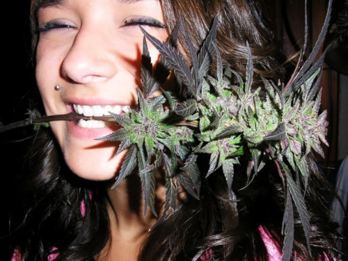 pot-cannabis-smoking-girls-www_dutchseedsbank_com-212