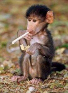 draft_lens17998861module150508254photo_1306753501funny_monkey_smoking